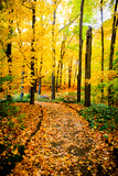 Autumn Pathway IV Photographic Print by Beth Wold