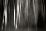 Abstract Trees Photographic Print by Beth Wold