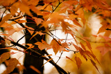 Fall Leaves II Photographic Print by Beth Wold