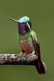 Hummingbird VI Photographic Print by Larry Malvin
