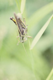 Grasshopper Photographic Print by Roberta Murray