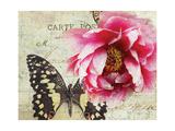 Carte Postale Peony Giclee Print by Amy Melious