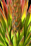 Colorful Agave I Photographic Print by Douglas Taylor