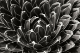 Patterned Succulent Photographic Print by Alan Hausenflock