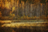 Birch in Autumn Photographic Print by Roberta Murray