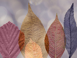 Leaf Patterns I Photographic Print by Kathy Mahan