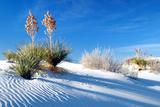 Sand Shadows II Photographic Print by Douglas Taylor