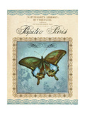 Papilio Paris Posters by Gregory Gorham