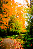 Autumn Pathway III Photographic Print by Beth Wold