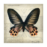 Butterflies Script IV Giclee Print by Amy Melious
