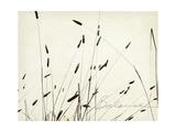 Grass Balance Giclee-tryk i høj kvalitet af Amy Melious