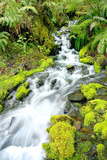 Mountain Stream Photographic Print by Douglas Taylor