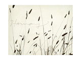 Grass Harmony Premium Giclee Print by Amy Melious