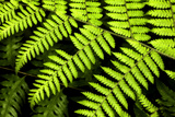 Fern Patterns Photographic Print by Larry Malvin