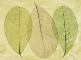 Leaf Collage II Photographic Print by Kathy Mahan