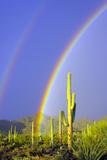 Saguaro Rainbow I Photographic Print by Douglas Taylor
