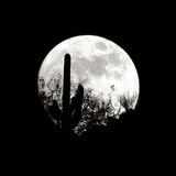 Moonrise in May I Photographic Print by Douglas Taylor