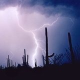 Electric Desert IV Photographic Print by Douglas Taylor
