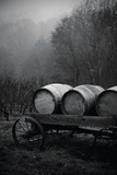 BW Oregon Wine Country II Photographic Print by Erin Berzel