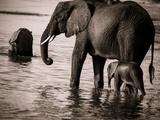 Elephant & Baby Fotografie-Druck von Beth Wold