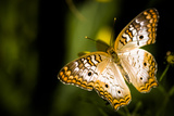 Butterfly III Photographic Print by Beth Wold