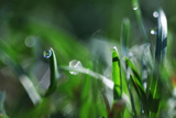 Dew Drops I Photographic Print by Leesa White