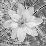 Bloom II Fotodruck von Kathy Mahan