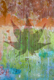 Maple Leaf I Photographic Print by Kathy Mahan
