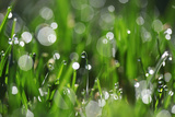 Dew Drops II Photographic Print by Leesa White
