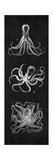 Octopi Study Kunst af N. Harbick