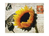 Carte Postale Sunflower Giclee Print by Amy Melious