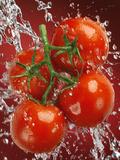 Four Tomatoes No.2 Fotografisk tryk af Alex Maxim