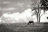 Horses in the Clouds II BW Photographic Print by Alan Hausenflock