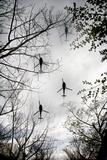 Helicopters and Tree Reprodukcja zdjęcia autor Gary Waters