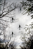 Helicopters and Tree Photographic Print by Gary Waters