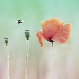 Im Abflug Photographic Print by Christine Ellger