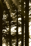 Sepia Shadows II Photographic Print by Erin Berzel