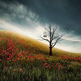 Free Bird Photographic Print by Christine Ellger