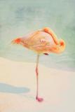Resting Flamingo Papier Photo par Roberta Murray