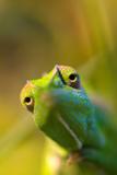Chameleon Photographic Print by Wolfgang Simlinger