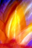 Incandescencia Lámina fotográfica por Douglas Taylor