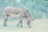 Zoo Crew Photographic Print by Roberta Murray