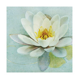Magnolia Sq Premium Giclee Print by Amy Melious