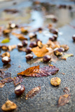 Chestnuts Photographic Print by Katarzyna Kuban