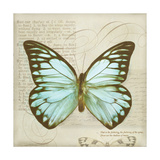 Vintage Butterfly II Giclee Print by Amy Melious
