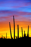 Solstice Sunset Photographic Print by Douglas Taylor