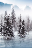 Forest in Winter Photographic Print by Svetlana Sewell
