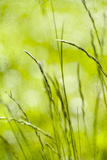 Green Grass 1 Photographic Print by Svetlana Sewell
