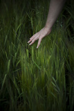 Grass Photographic Print by Svetlana Sewell