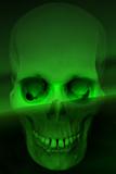 Human Skull Photographic Print by Svetlana Sewell